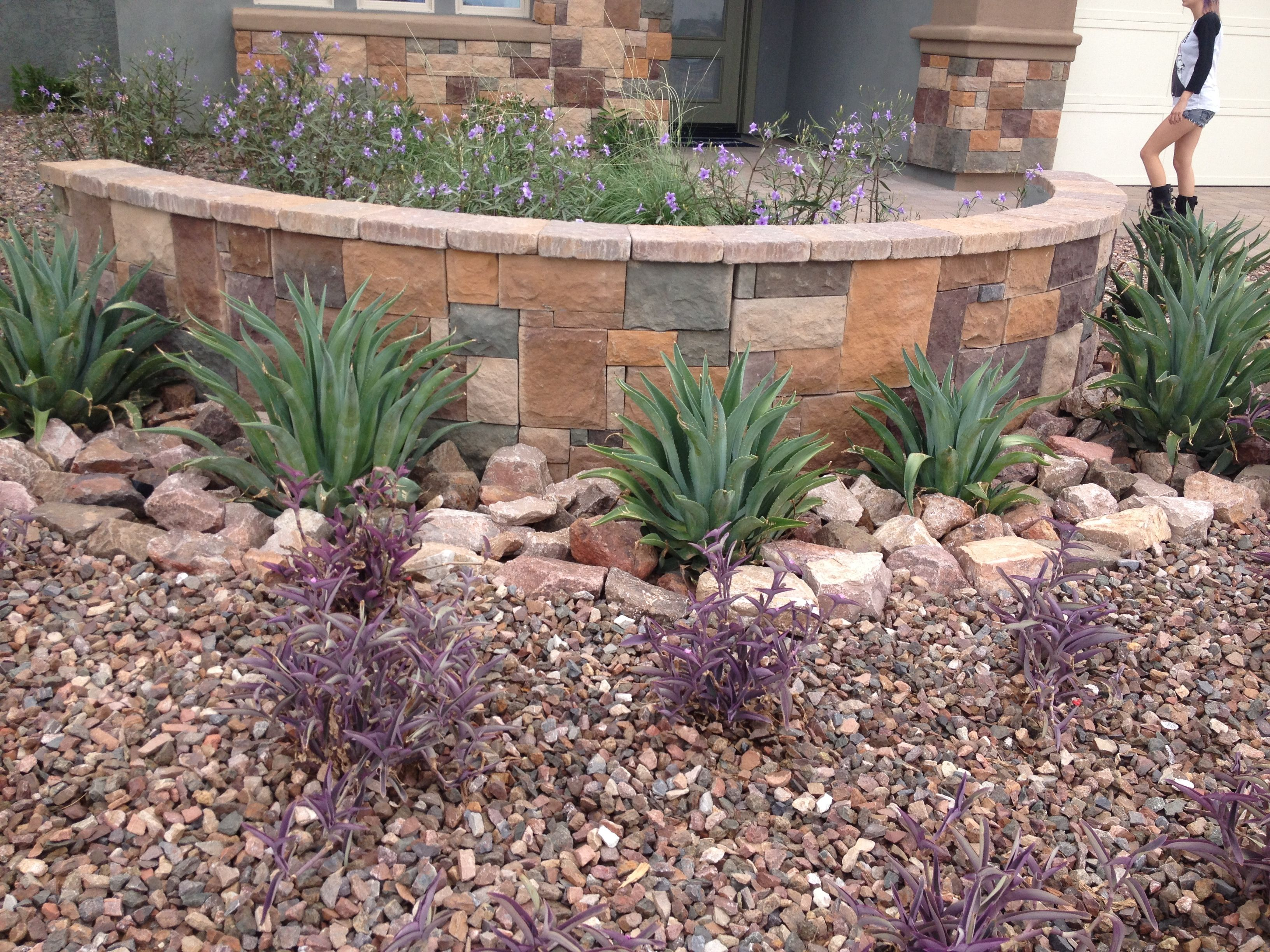 Desert landscape and hardscape in az succulents cacti for Desert landscape design ideas