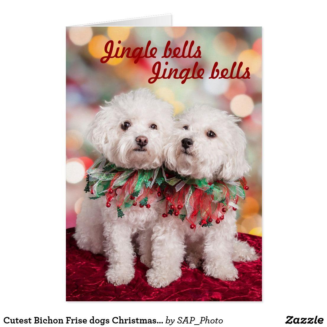 Cutest Bichon Frise Dogs Christmas Card Bichon Frise Dog And Cat