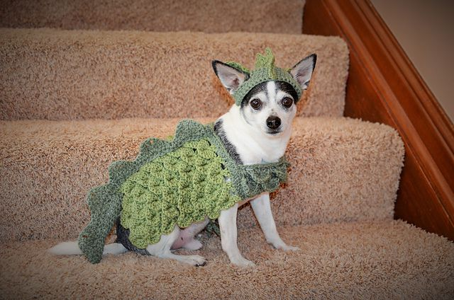 Small Dog Dragon Costume Pattern By Stephany S Stitches Dog