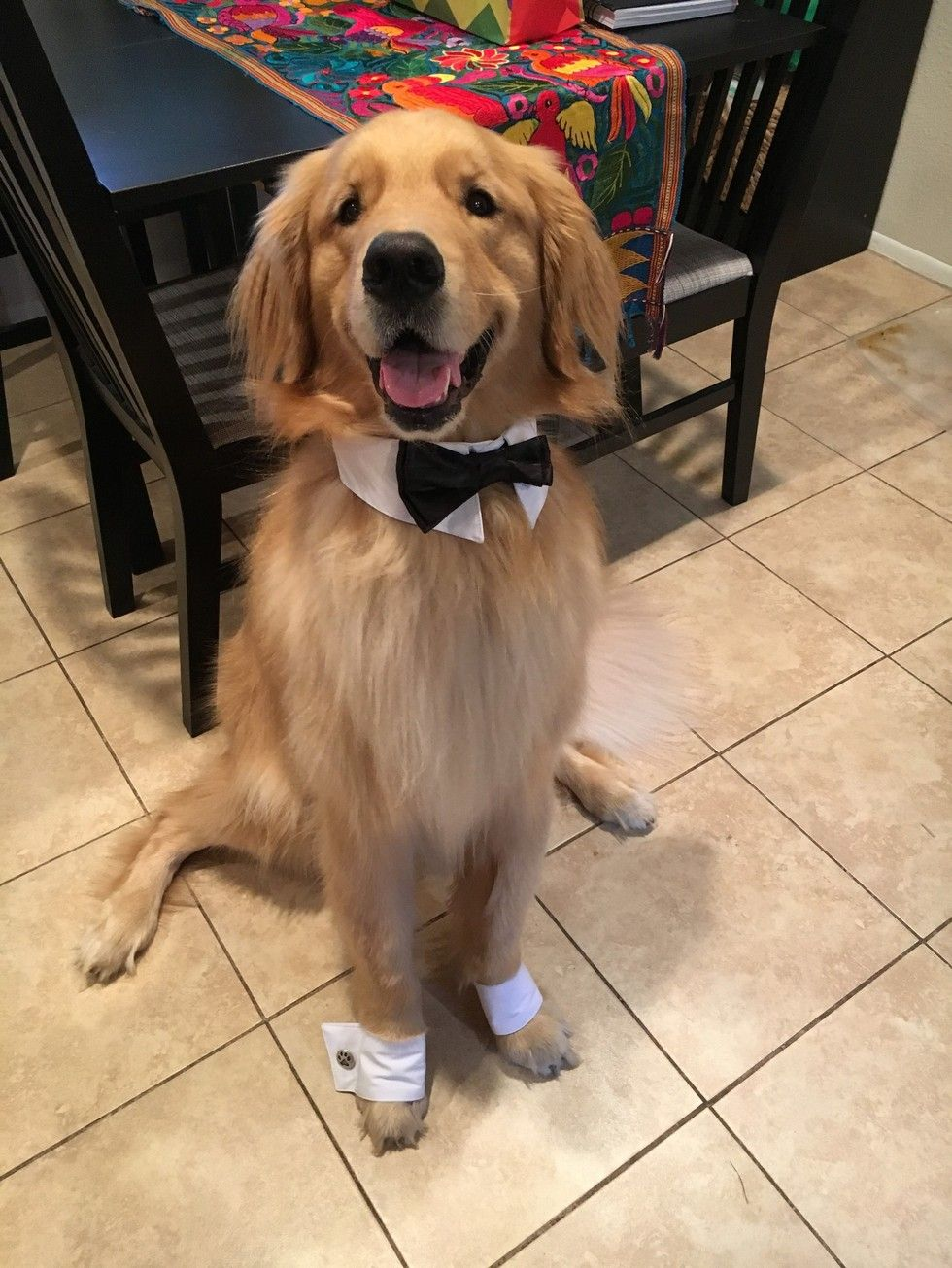 Dog Dresses Up To Help His Dad Propose To His Mom Dressed Up