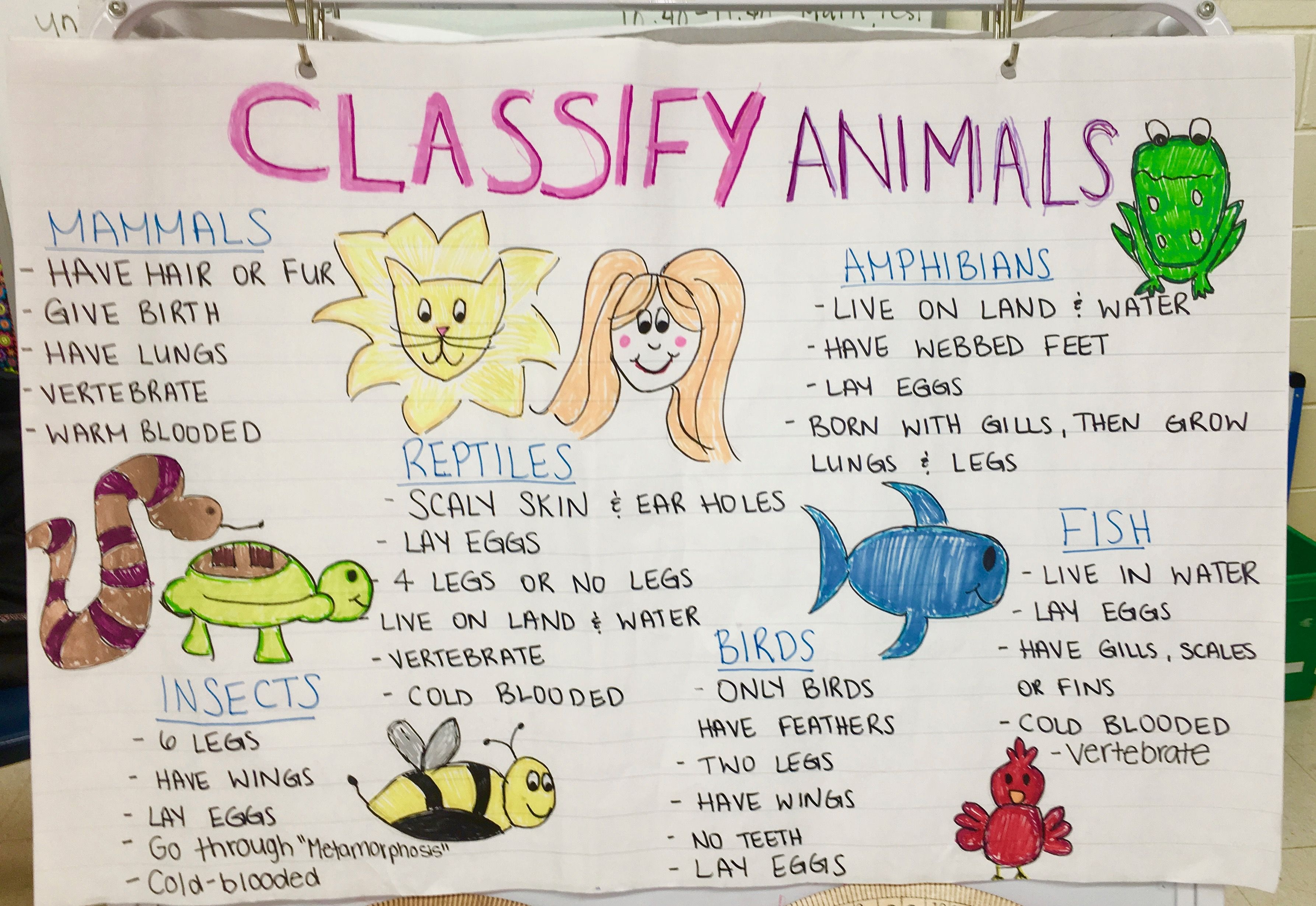 Classifying Animals Anchor Chart This Anchor Chart Goes