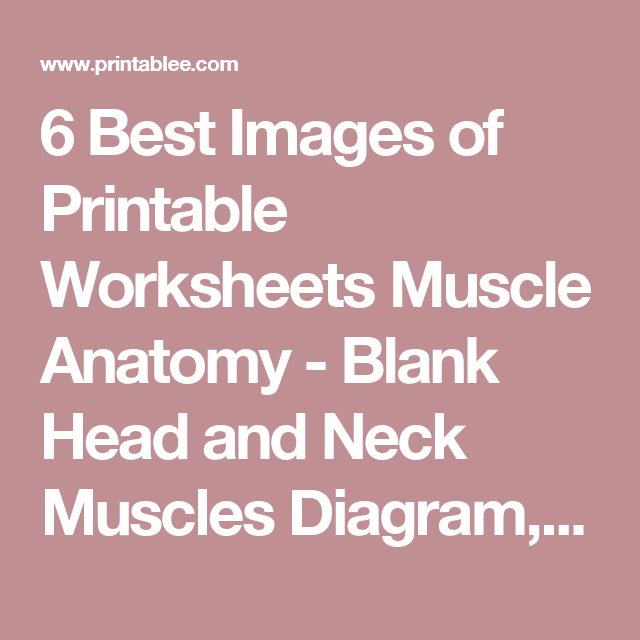 6 Best Images Of Printable Worksheets Muscle Anatomy Blank Head