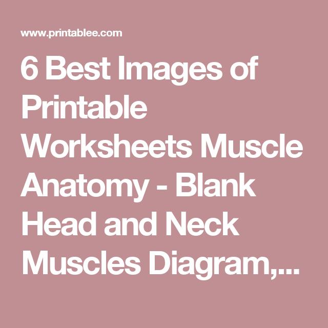6 Best Images of Printable Worksheets Muscle Anatomy - Blank Head ...