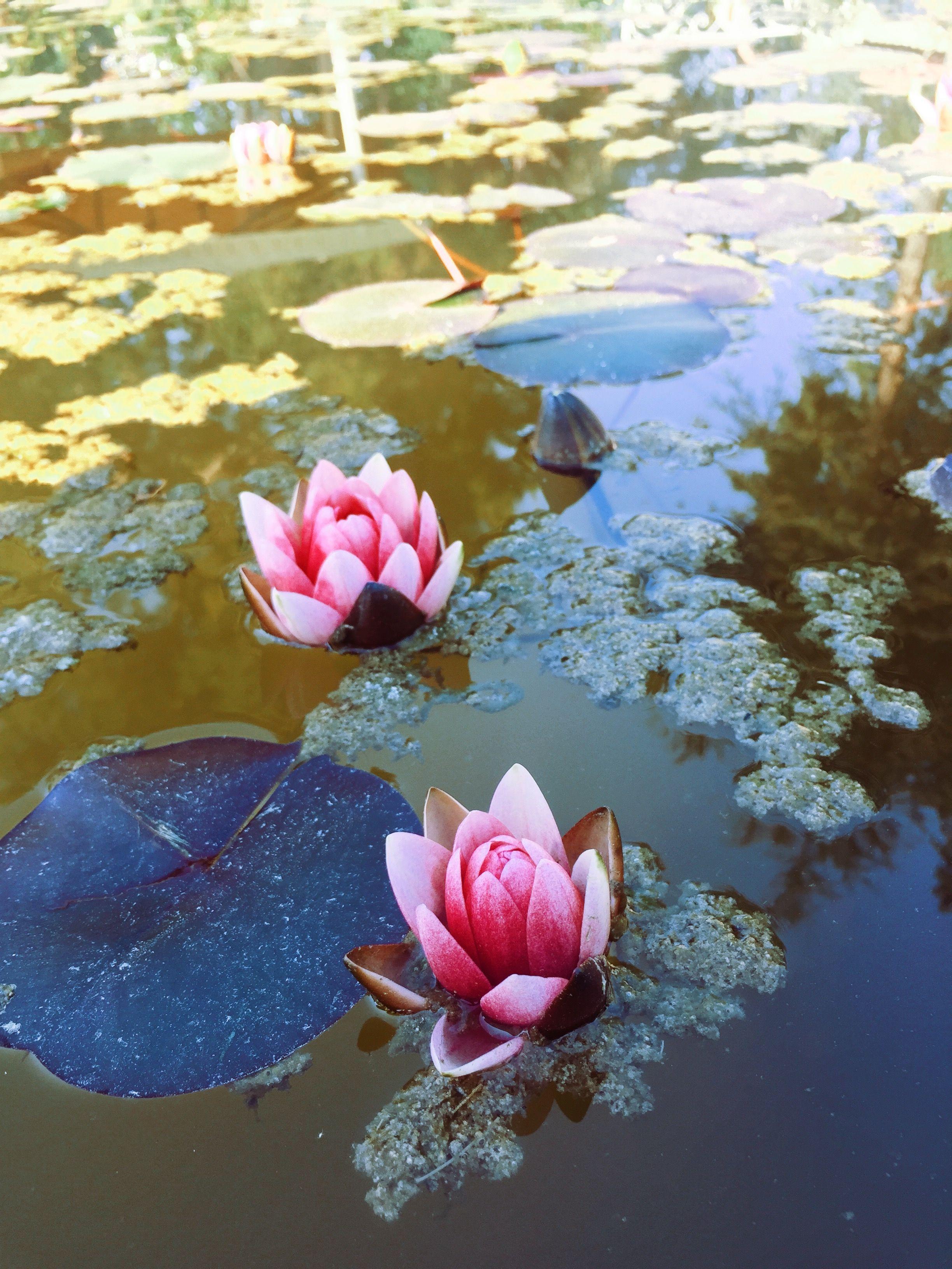 Pin by ozge izdal on god is dead pinterest lotus flower izmirmasajfo