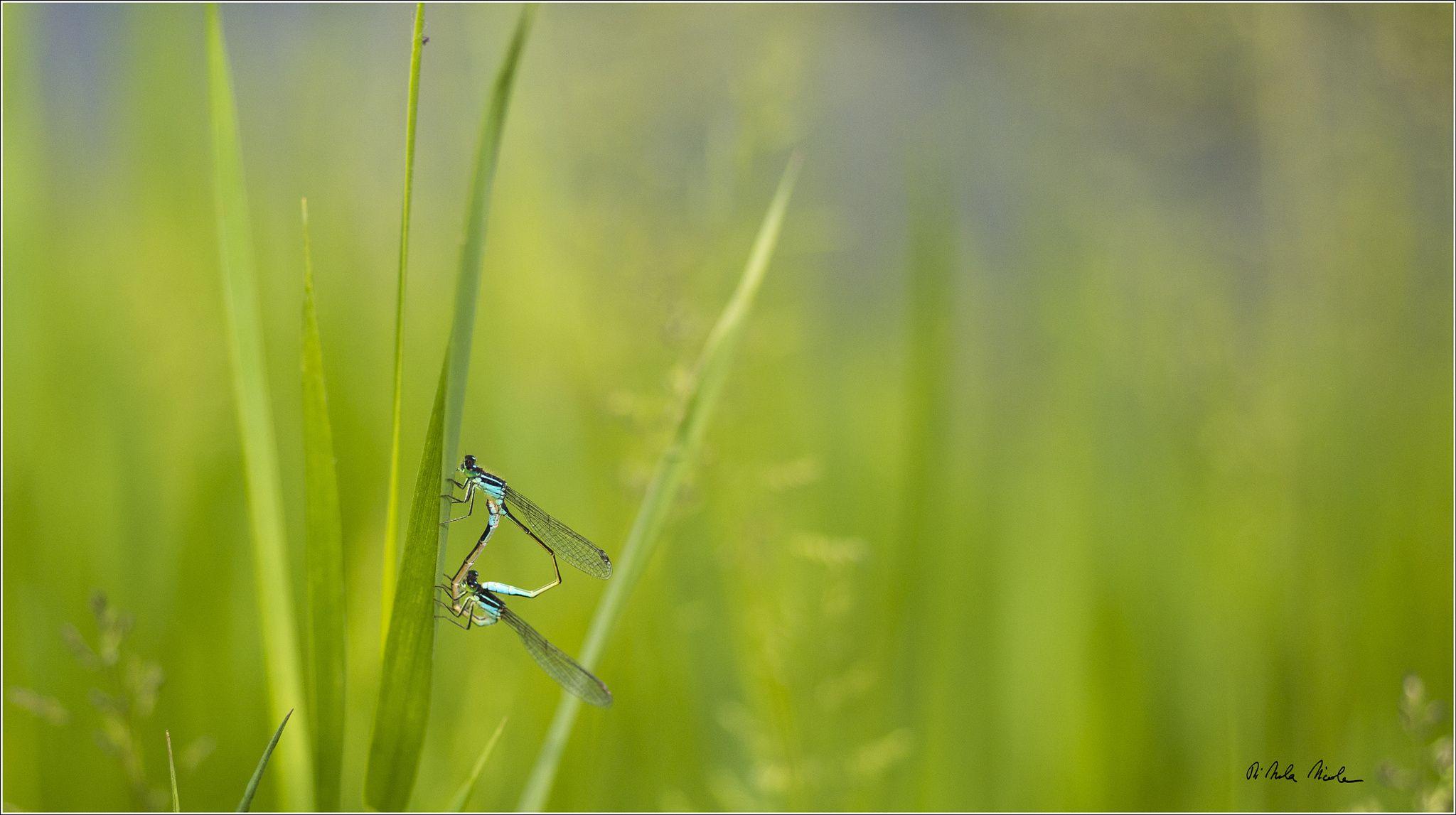 Tra i fili d'erba by Nicola Di Nola on 500px