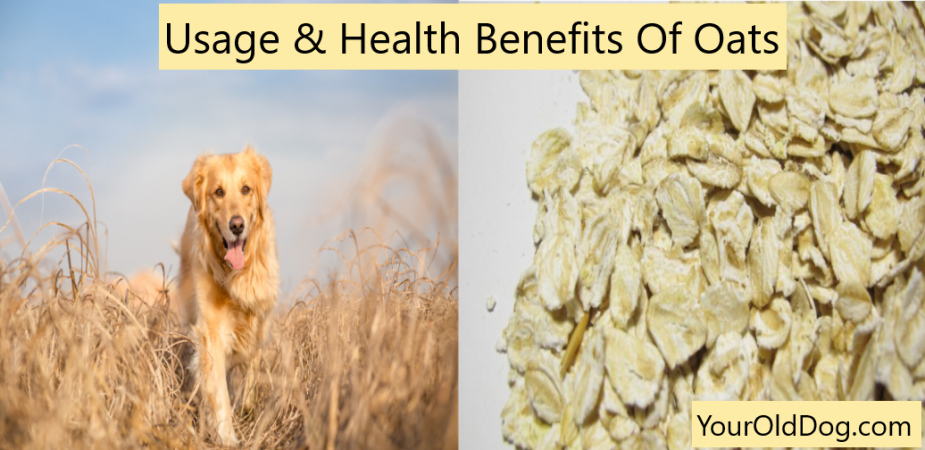 Health Benefits Of Oats For Dogs Your Old Dog In 2020 Old Dogs Yeast In Dogs Dogs