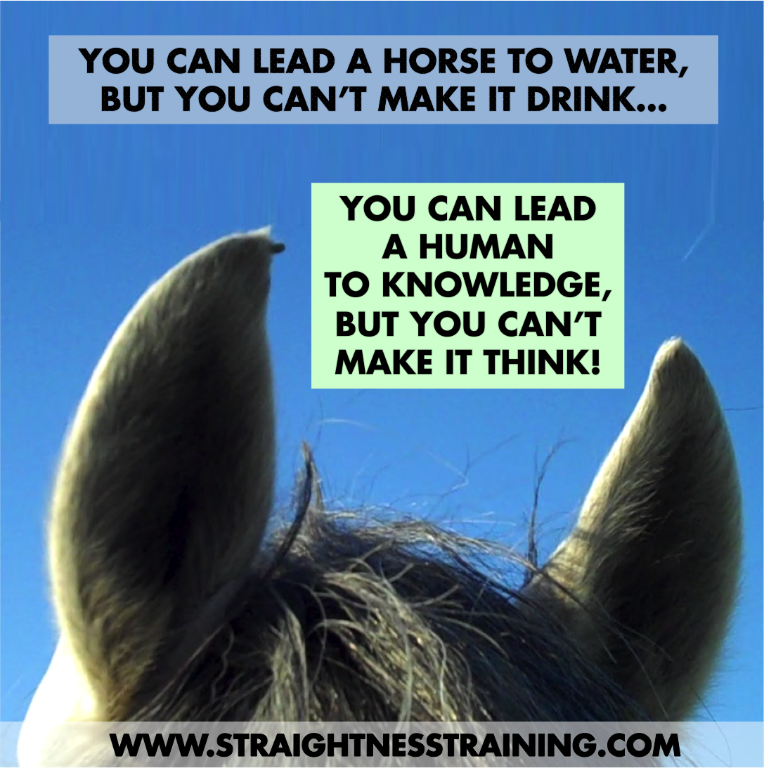 You can lead a horse to water lyrics