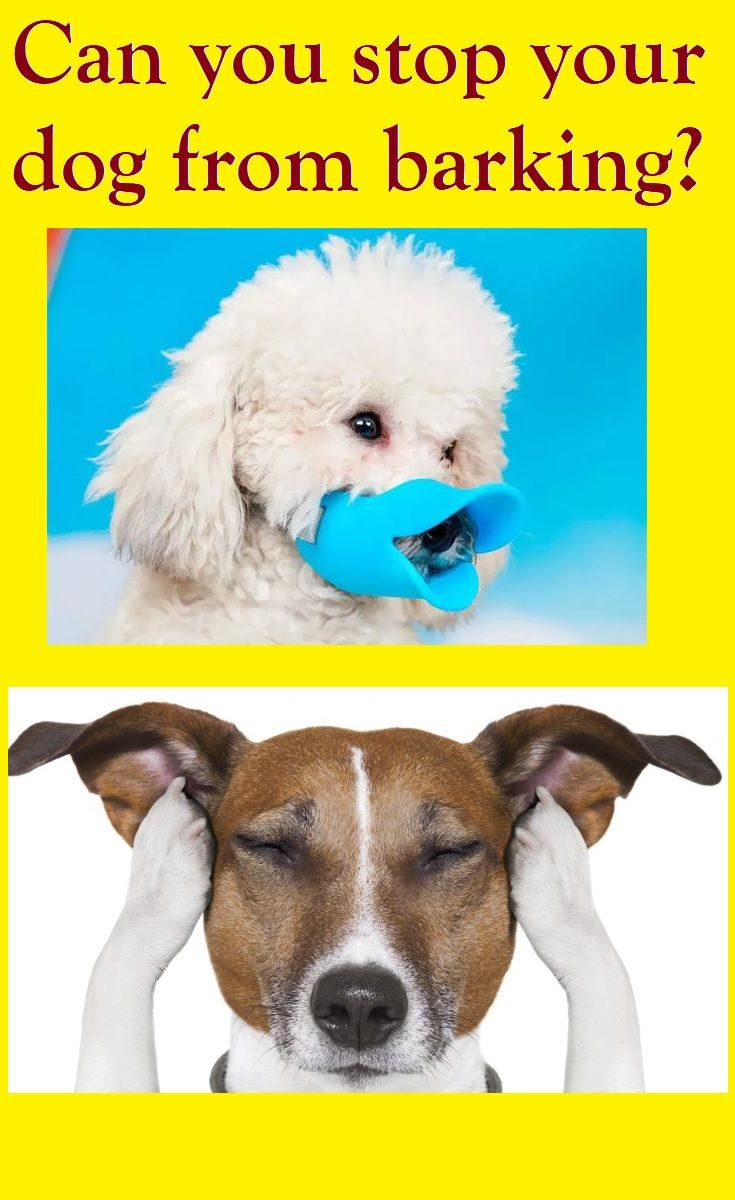 Best Funny Dogs How to stop a dog from barking Train your dog not to bark. With a few simple tips you can finally get your dog to stop barking. 9
