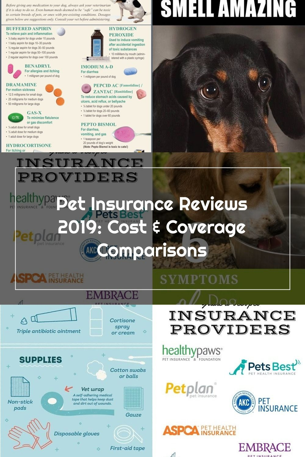 These are the best pet insurance providers in the nation