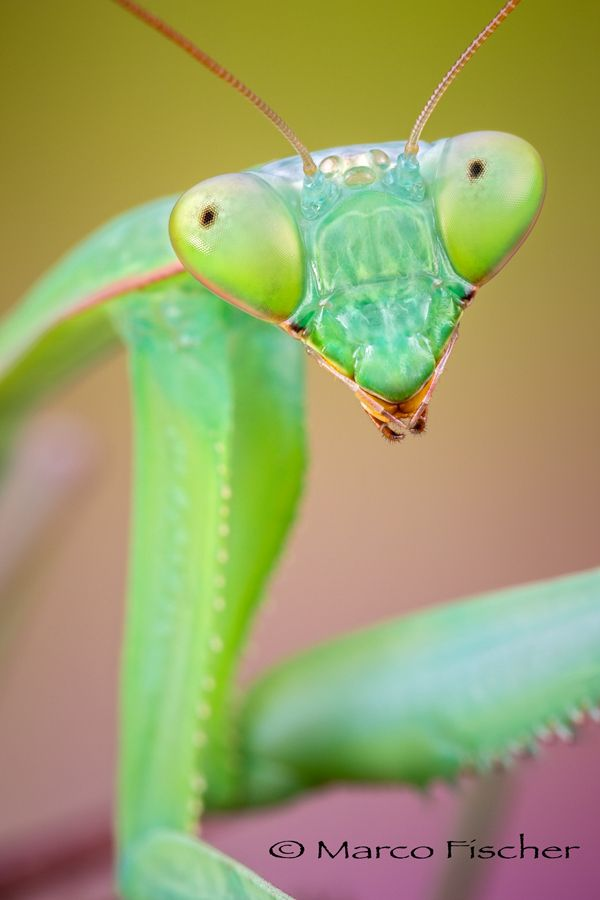 Yeah, Green Eyes by Marco Fischer - Photo 164387081 - 500px