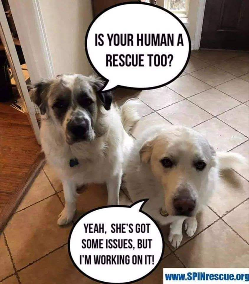 Is Your Human A Rescue Too Cute Dog Pictures Funny Animal Pictures