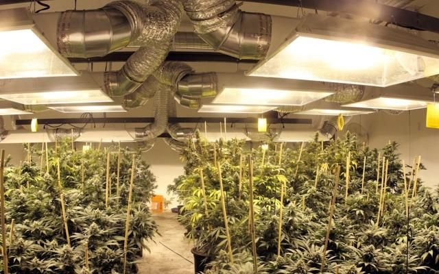 grow room design - Basement Grow Room Design
