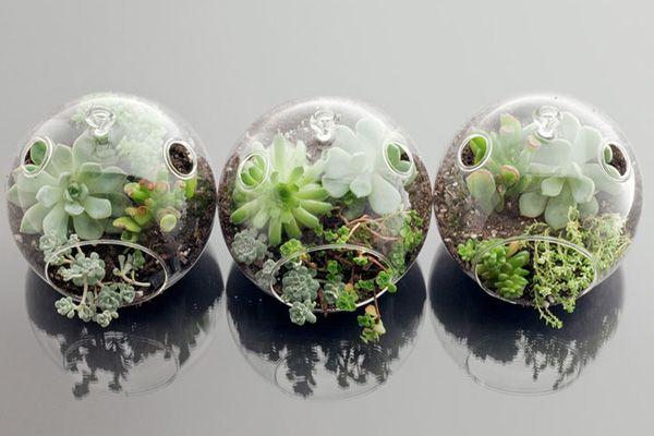 botany-factory-terrarium