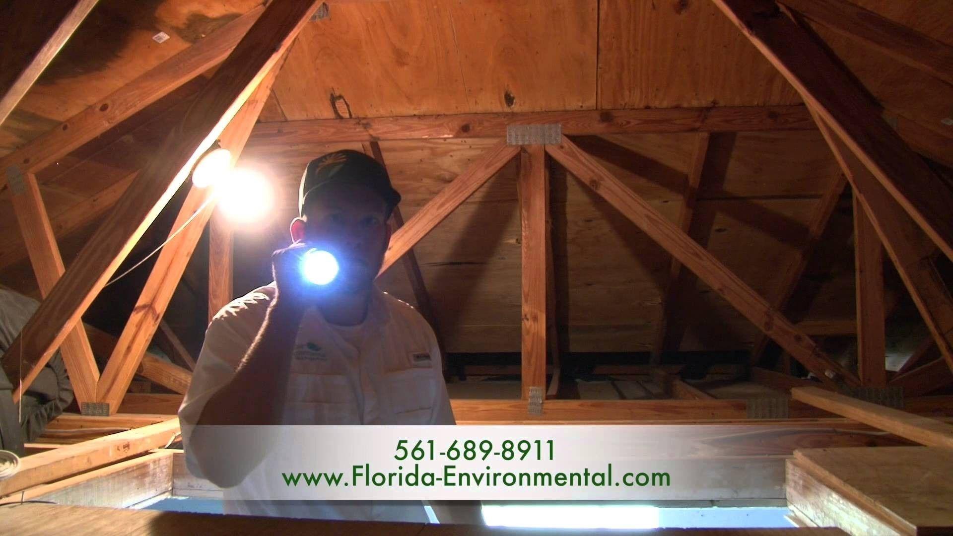 Termite Control Palm Beach Gardens Fl