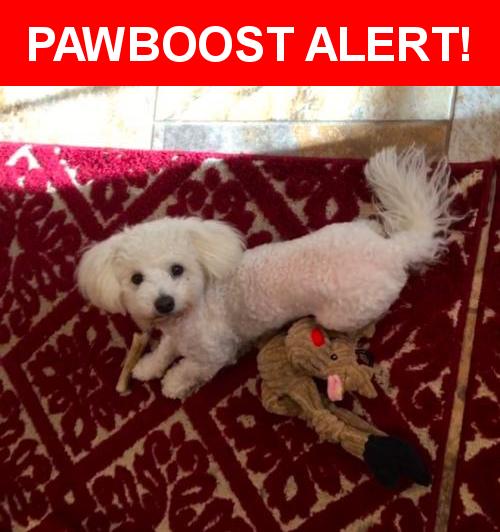 Please spread the word! Lucky was last seen in Santa Rosa, CA 95407.    Nearest Address: Near Kirkwood Ct & Beachwood Dr
