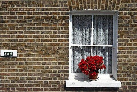 Flower Pot On A Window Sill Window Sill Flower Pots Flowers