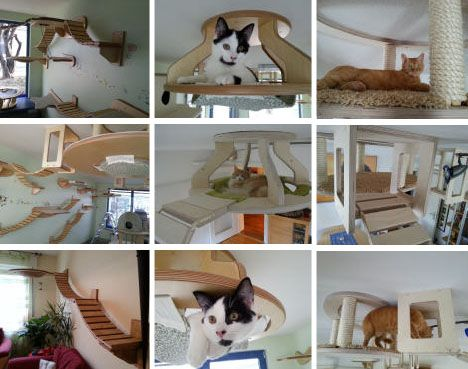 1000 images about cat walkway on pinterest cat houses cat furniture and cat walkway - Cat Room Design Ideas
