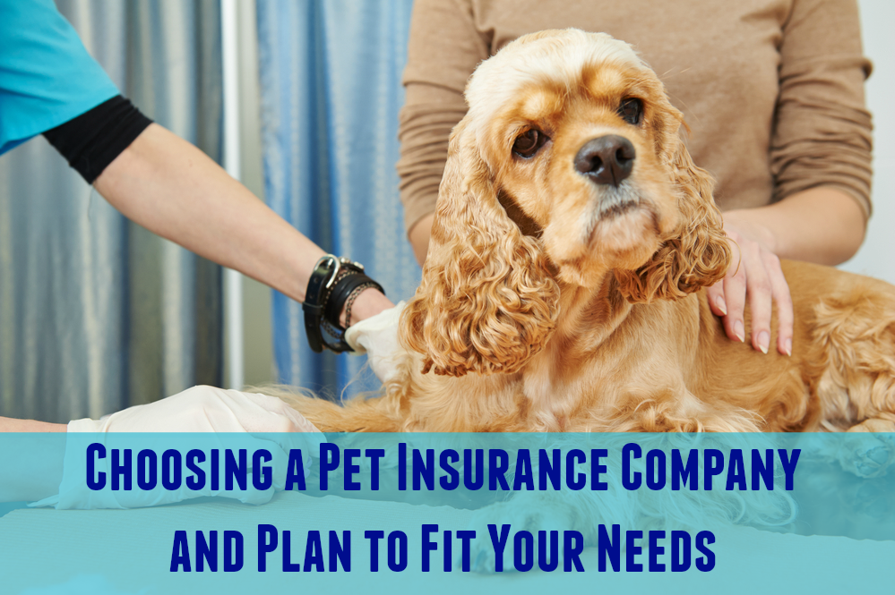 Choosing a Pet Insurance Company and Plan to Fit Your