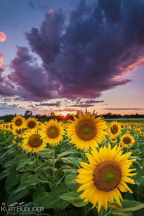 120813kbp066-Edit.jpg   Kurt Budliger   Nature images ...