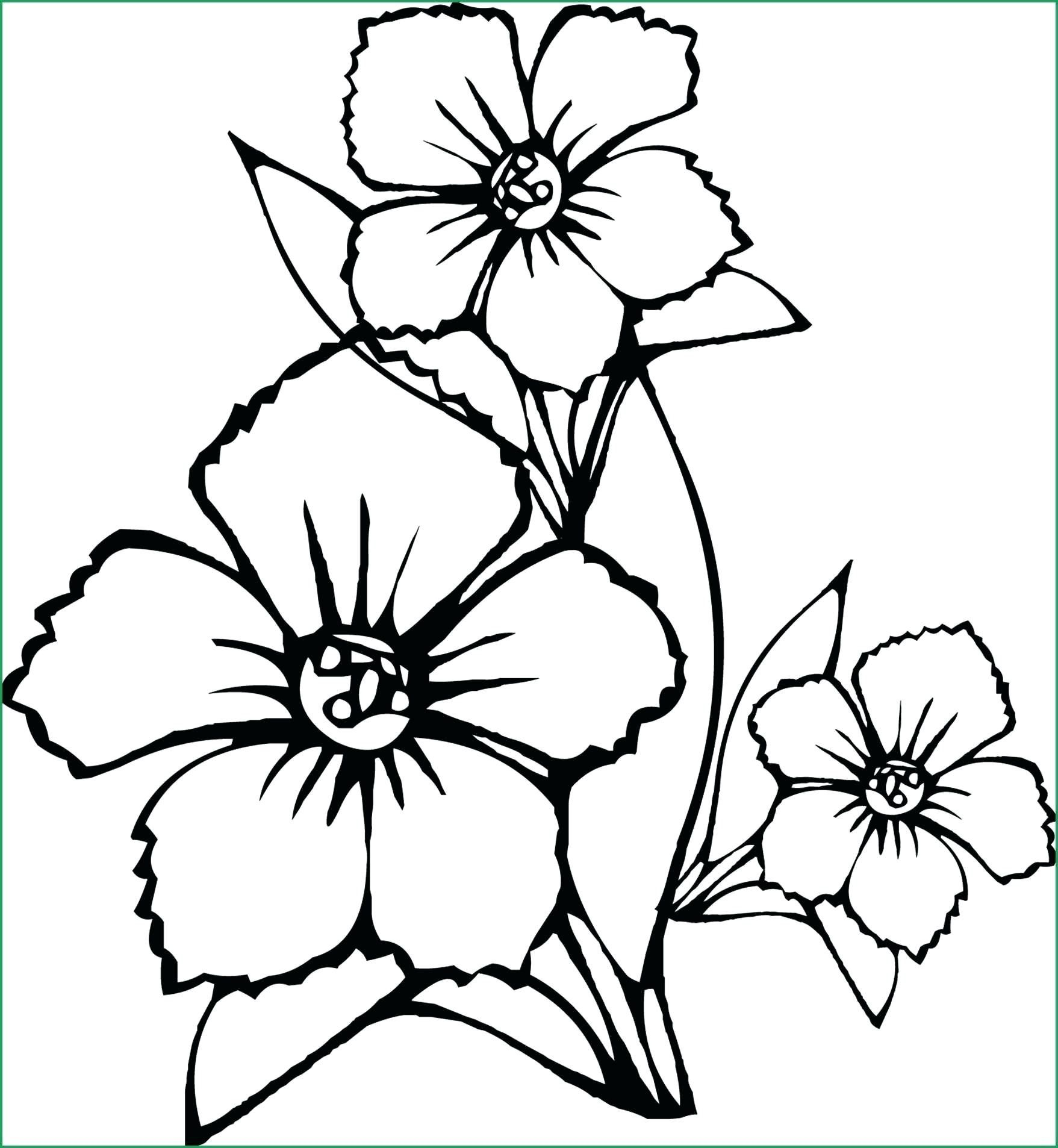 34 Butterfly On Flower Coloring Pages Gif In 2021 Butterfly Coloring Page Printable Flower Coloring Pages Flower Coloring Pages