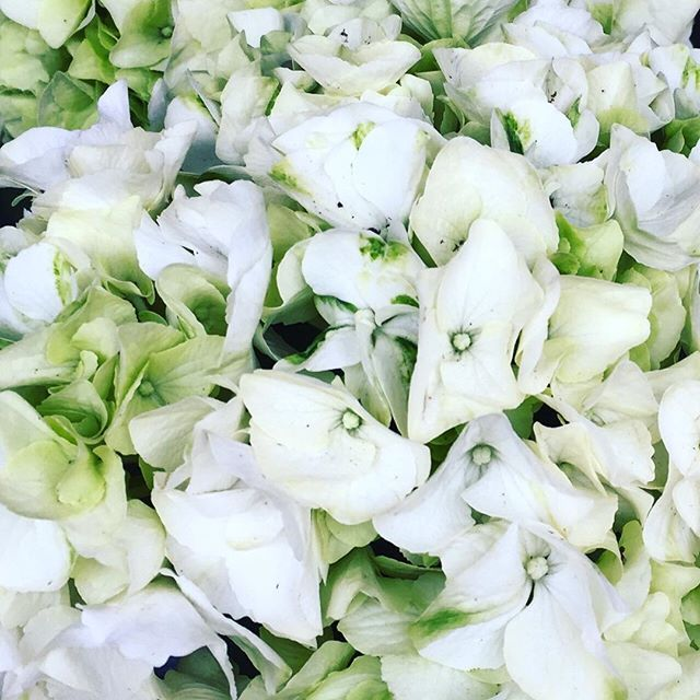 Night blooming flowers are always more beautifulhope you all have night blooming flowers are always more beautifulhope you all have a lovely mightylinksfo