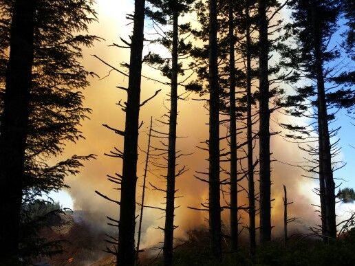 Forest Fire Smoke 4
