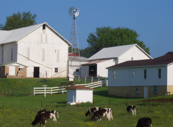 Amish dairy, Ohio