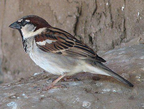 Most Common Backyard Birds   Backyard birds, Backyard, Birds