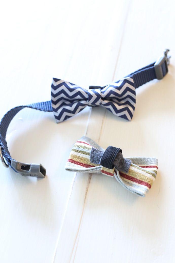 9e222e19c386 No-Sew Dog Bow Tie Collar Slide | Cute Animals | Dog bowtie, Diy dog ...