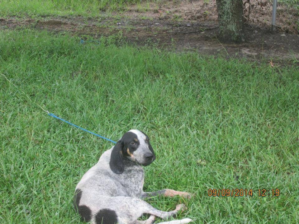 Meet Coco Small Dog Adoption Pet Adoption Sick Pets