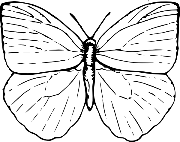 Easy butterfly drawings butterfly outline clip art