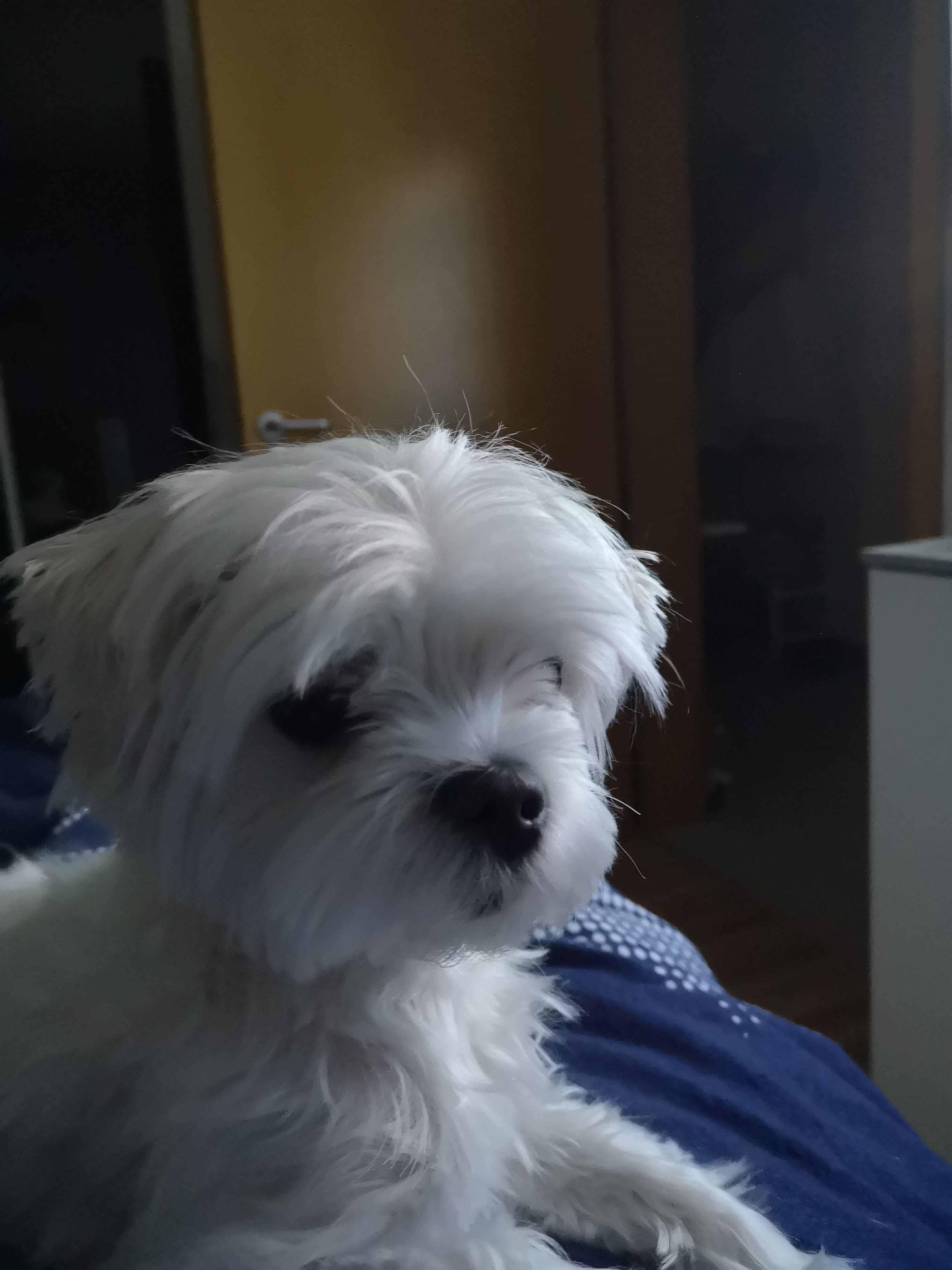 Pin auf Hunde Fotos