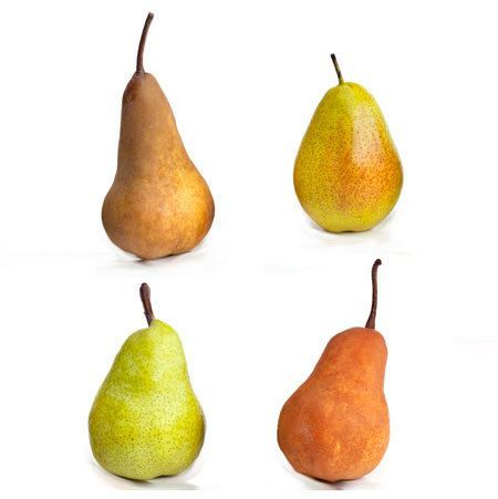 4 In 1 Pear Tree Fast Growing Trees Tree Nursery Pear Trees