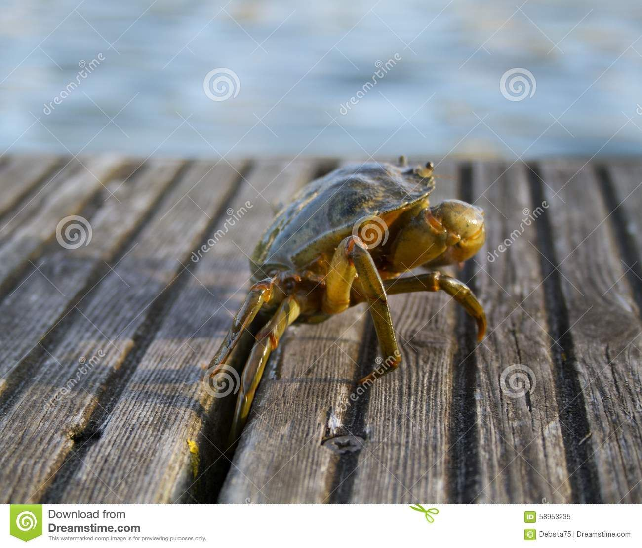 Weymouth Crab - Download From Over 35 Million High Quality Stock Photos, Images, Vectors. Sign up for FREE today. Image: 58953235