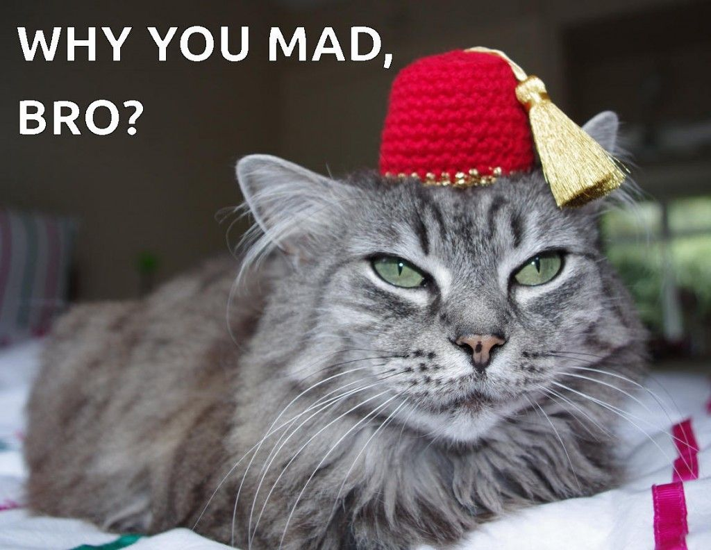 'cause u look mad, bro Funny cat memes, Cat memes, Cats