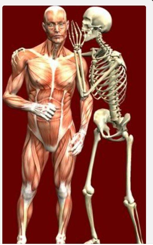 Anatomy Ot Pinterest Anatomy