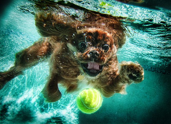 There S Something About A Dog Underwater That Seems To Make It So