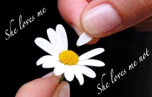 Love Me Love Me Not Flower