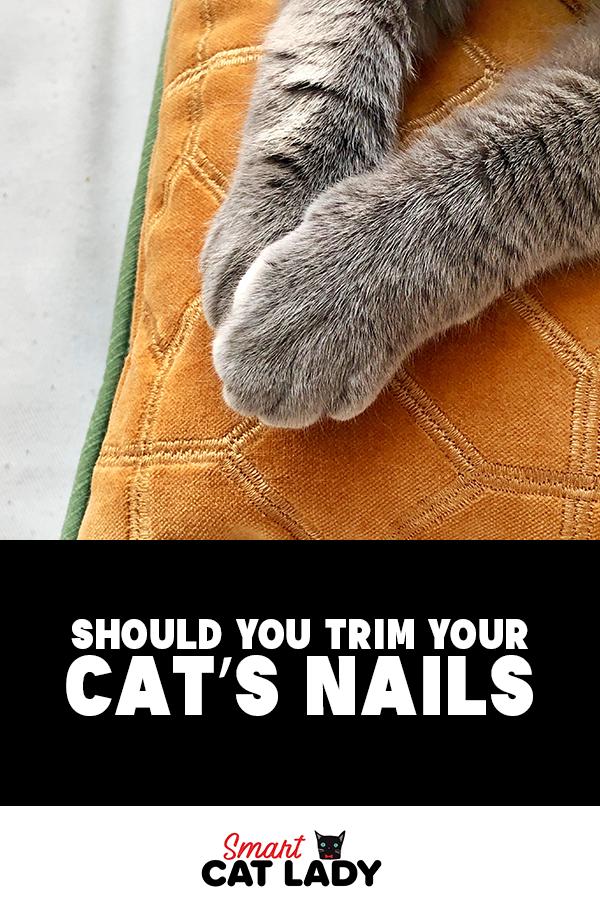 Should You Trim Your Cat S Nails Cats
