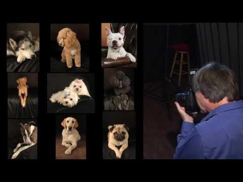 Professional Dog Pictures San Jose