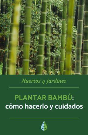 PLANTAR BAMBÚ: Cómo hacerlo y Cuidados – Guía