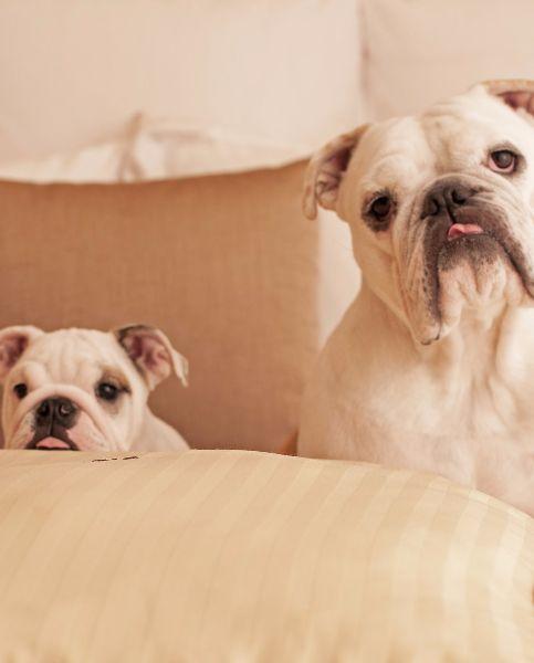 The 10 Best Pet Friendly Hotels In U S