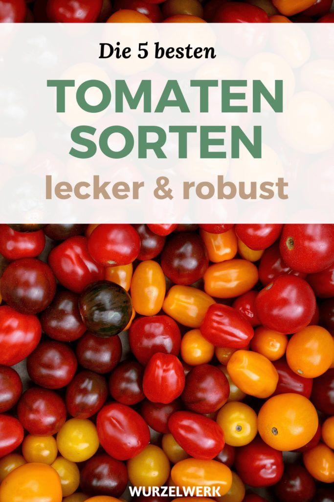 Die 5 besten Tomatensorten: alte, robuste, leckere Tomaten pflanzen! - Wurzelwerk