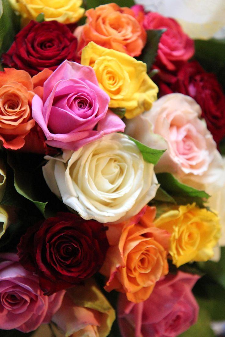 Фото цветов розы и их название