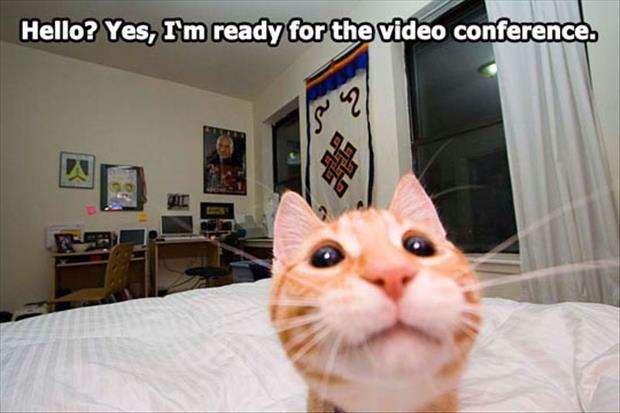 Fisheye Webcams make you look stupid.