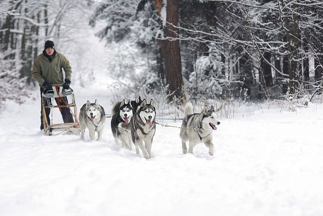 21 Things You Didn T Know About The 7 Dog Breed Groups Husky