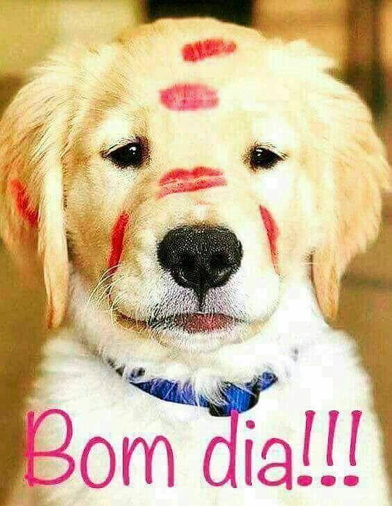 Pin De Lane Lima Em Dogs
