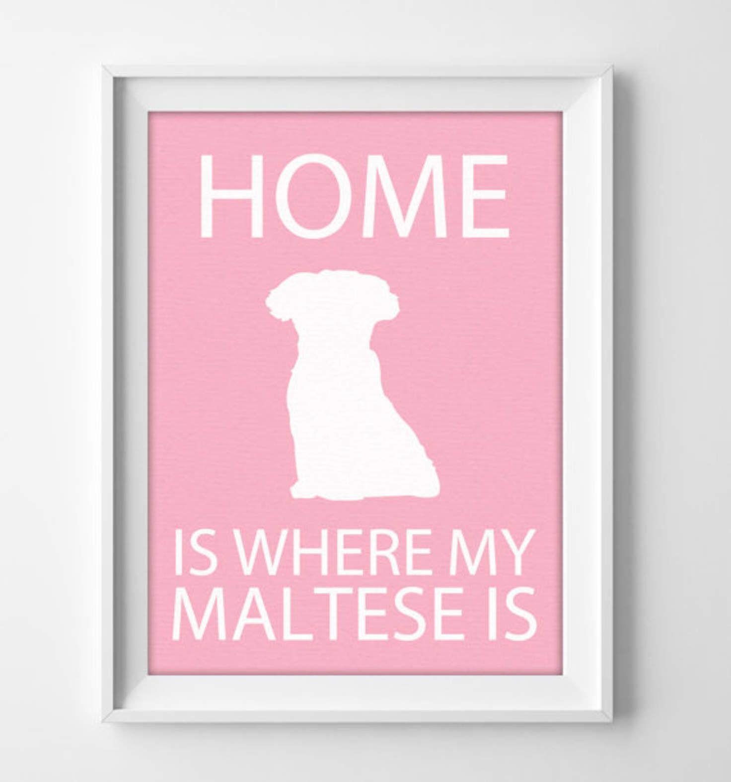 8x10 Maltese Wall Art Illustrated Dog Art Maltese Decor Dog Breed Wall Art Minimalist Pet Art Puppy Wall Art Puppy Wall Art Dog Wall Art Wall Art Prints
