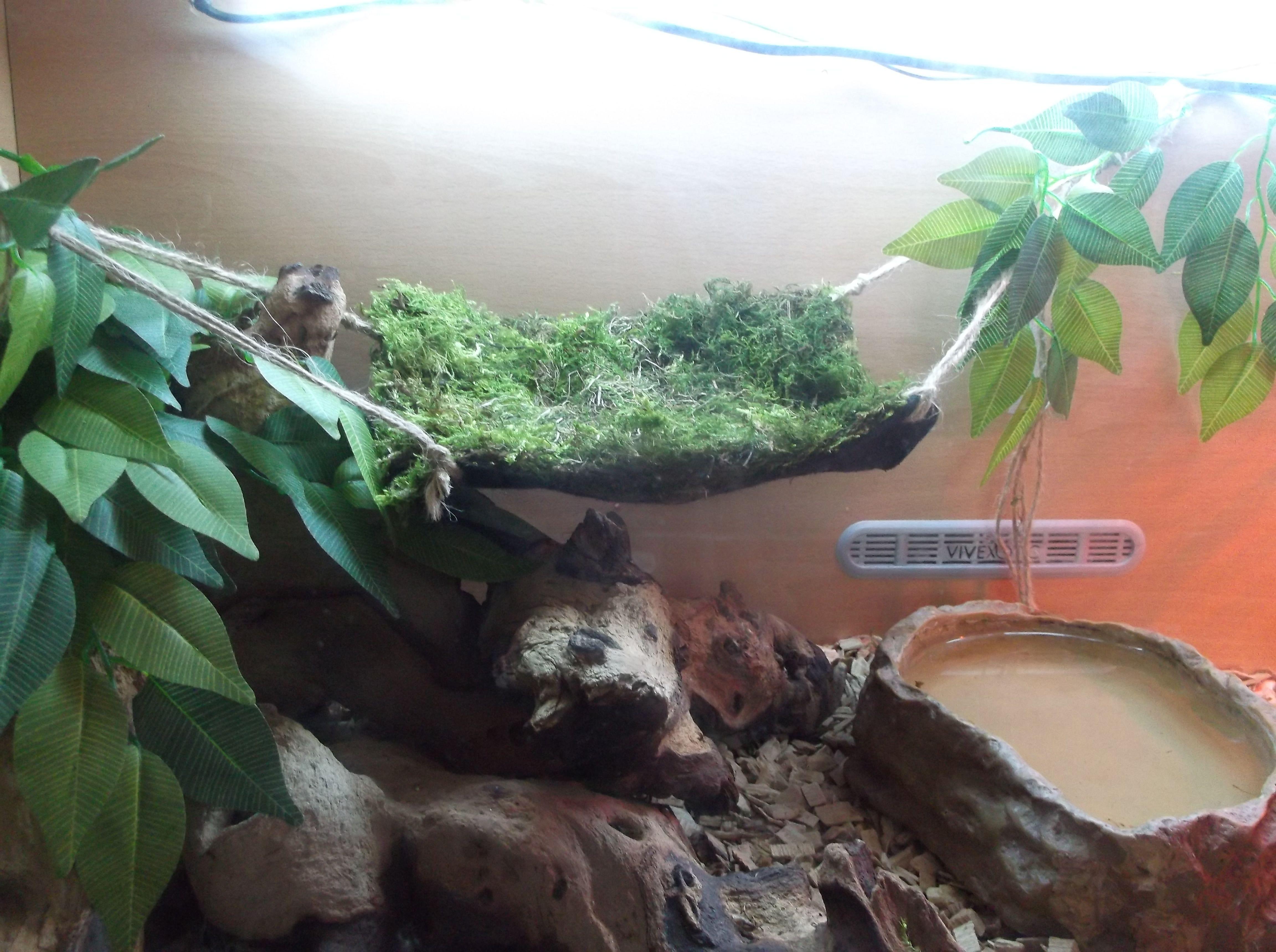 His new updated home hope he like his new hammock bearded dragon