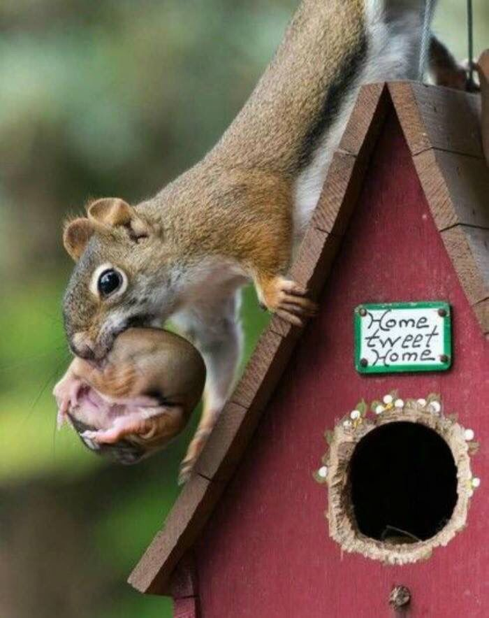 Mother squirrel carrying baby